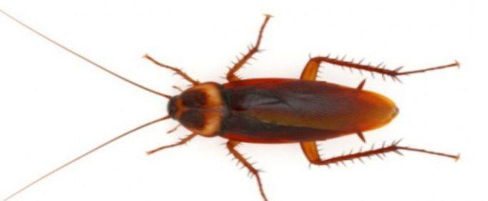 How Much Does Cockroach Extermination Cost