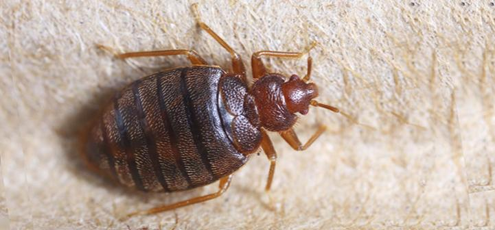 Awesome How Much Does Bed Bug Extermination Cost